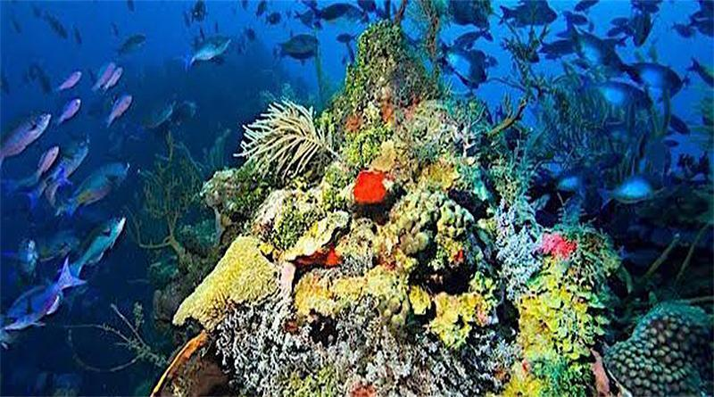 Island Ecosystems Need Help From Humankind