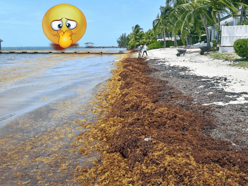 Sargassum: It Stinks!