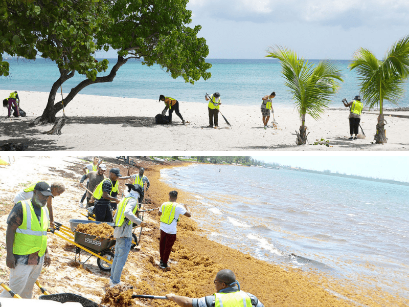 NiCE Project Cleans Up Cayman