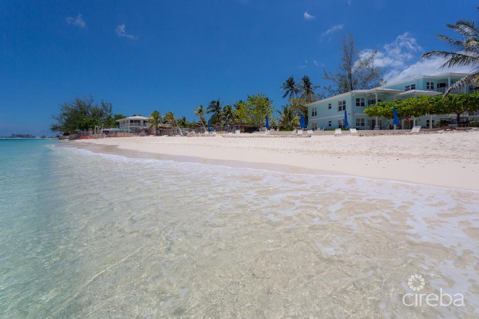 Seagull, seven mile beach